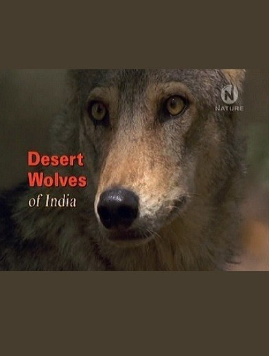 Desert Wolves of India is similar to Mein Morder kommt zuruck.